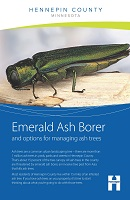 Emerald ash borer and options for managing ash trees brochure